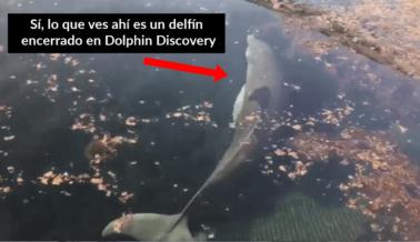 ¿Abandonó Dolphin Discovery a los Delfines?