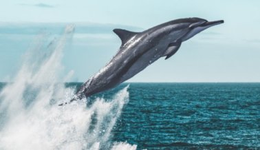 ¡Victoria! AAA Northeast Deja de Vender Tickets Para SeaWorld