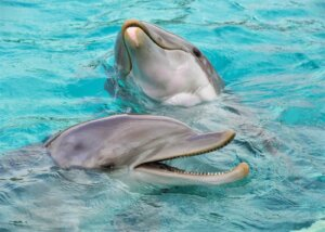 delfines juntos en el agua