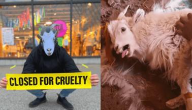 NowThis presenta un Minidocumental sobre la Batalla de PETA Contra Urban Outfitters