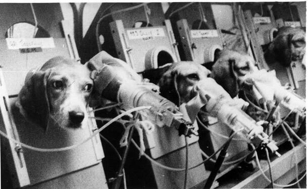 dog-beagles-smoking-testing