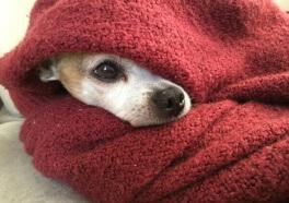 $5,000 Reward Offered For Help in Nabbing Dog Killer