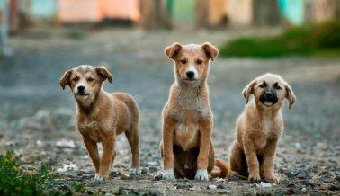 La población de animales callejeros en México crece 20% cada año, ¿por qué?