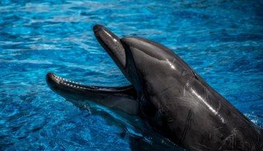 Si amas a los delfines, JAMÁS pagues para nadar con ellos