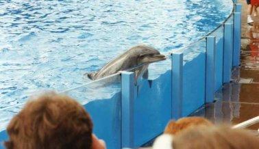 La Delfín Ariel Ha Vivido en Cuarentena Más de 20 Años