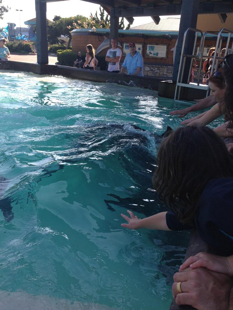 dolphin-interact