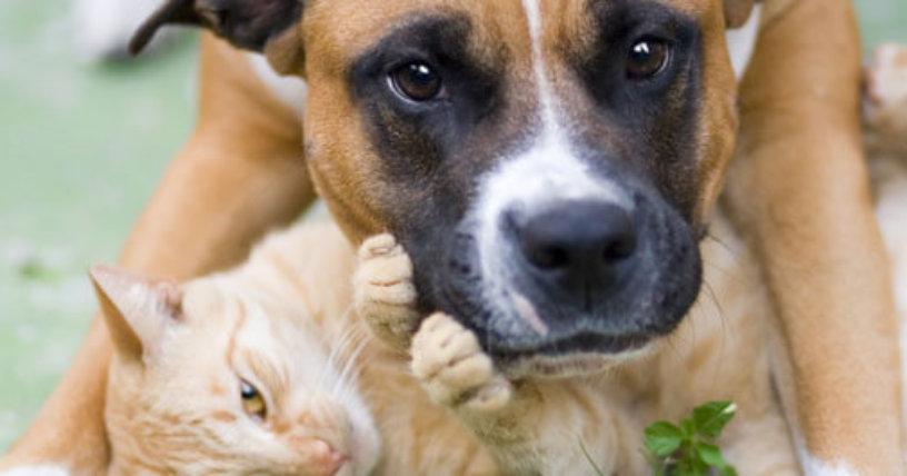 Hazte Miembro De PETA Únete Ahora