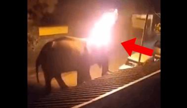Hombres Fueron Captados en Cámara Prendiéndole Fuego a un Elefante