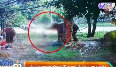 Los Elefantes Viven un Infierno –y son Incluso Asesinados– Para Pasear Turistas