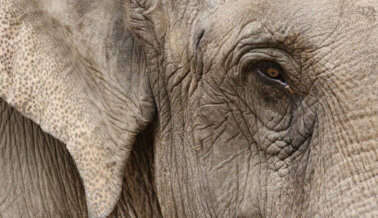 FOTOS: elefantes muertos y lesionados cubren una autopista española luego de accidente de camión de circo