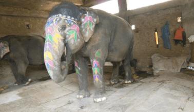 Exhorta al Ministro de Turismo de la India a Que Defienda a Los Elefantes
