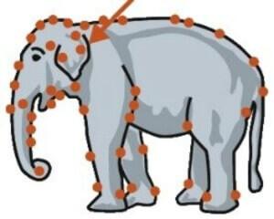 elephant-skin