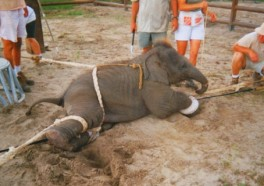 Ringling to Phase Out Elephant Acts by 2018, but Should Do It NOW