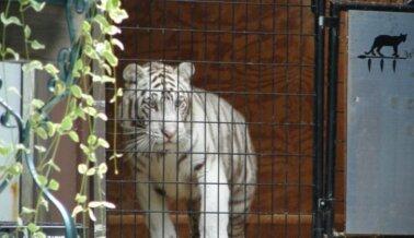 Ayuda a los Animales que Sufren en Wild Woods Animal Park