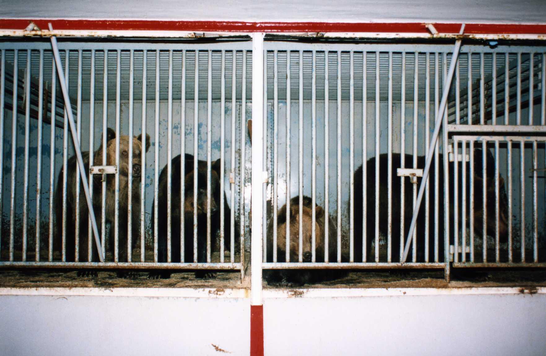 caged circus bears