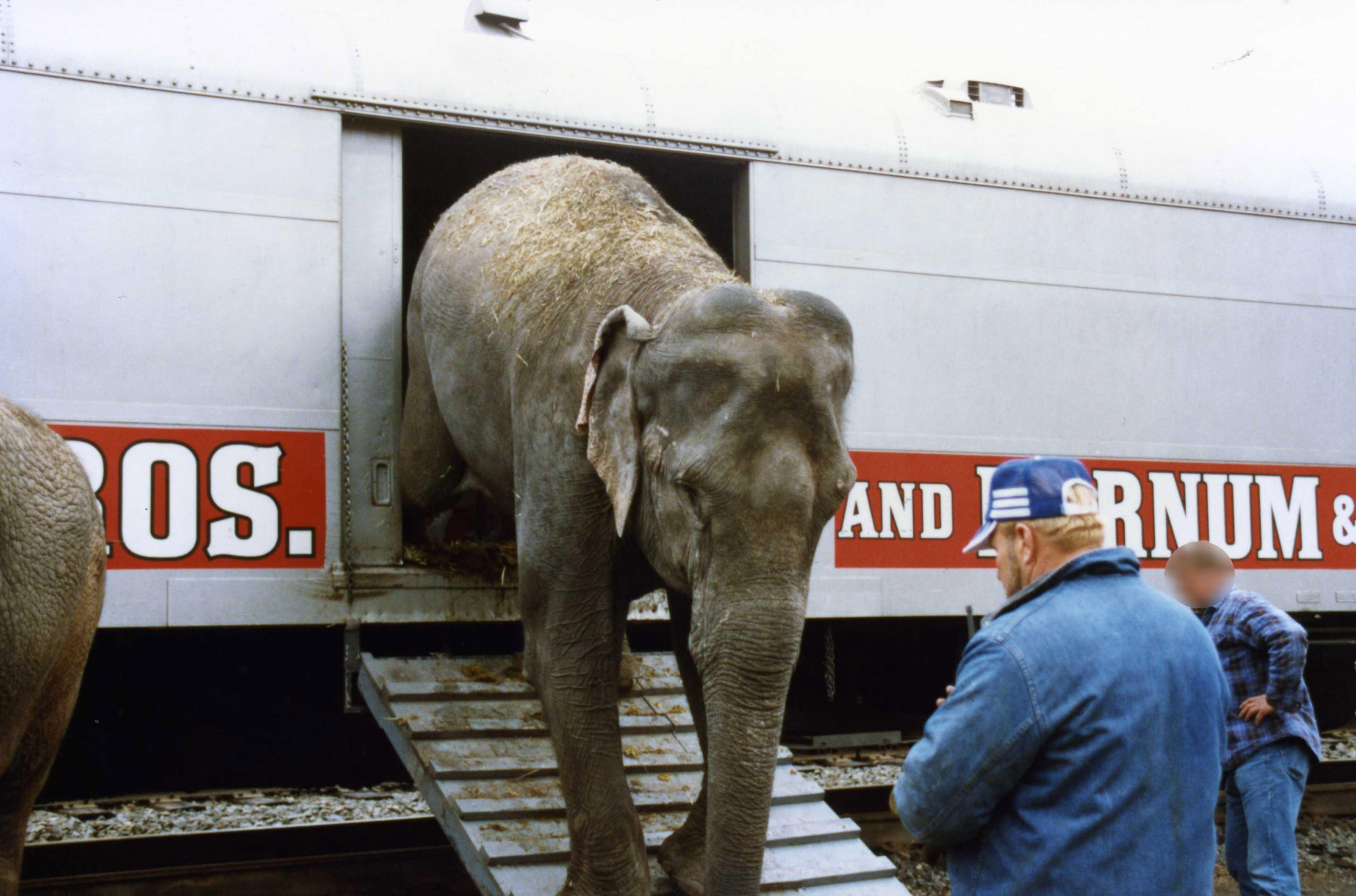 circus elephants leaving box car