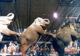 10 Reasons Not to Attend the Circus