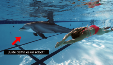 ¿Un Delfín Robótico Para Reemplazar a los Que Están en Cautiverio? Apunta SeaWorld