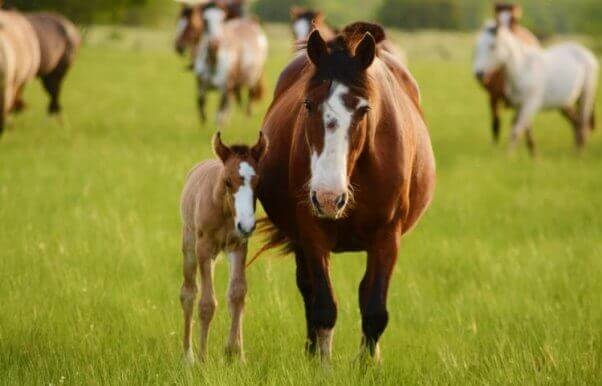 Horse and pony in field