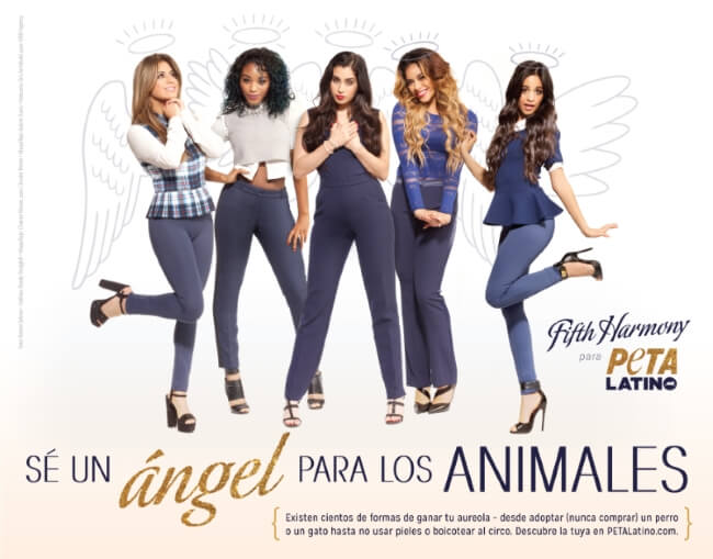 fifth harmony ad optimized