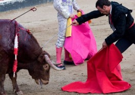This Huge Rally in Madrid May Be the Largest-Ever Demonstration Against Bullfighting