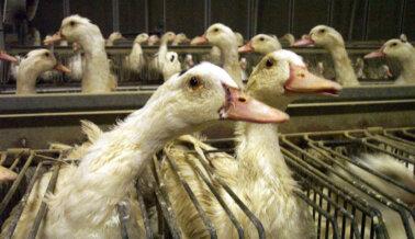 Investigación de la Comisión Federal de Comercio (FTC) Hace que Canada Goose Cambie de Lenguaje en su Web
