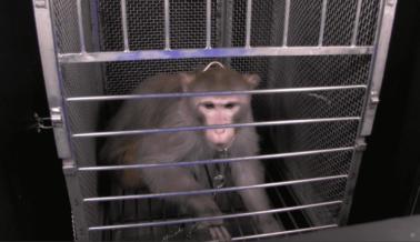 El Director del NIMH Pierde los Estribos en Defensa de Experimentos
