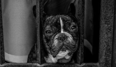 Los Millennials Están Comprando Perros Para Fotos de Instagram y los Abandonan