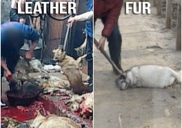Leather vs. Fur: Which Is Worse?