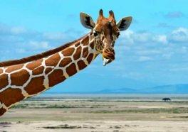 Panicked and Terrified Giraffe Dies at Taiwanese Zoo