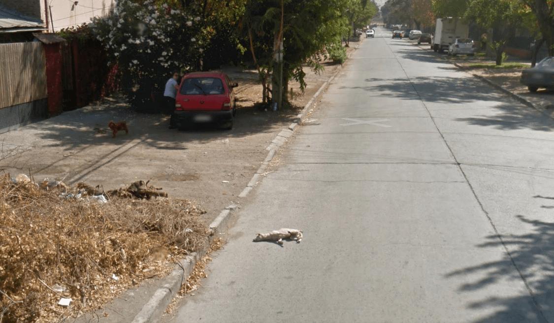 google stray dog 2