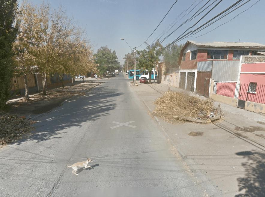 google stray dog