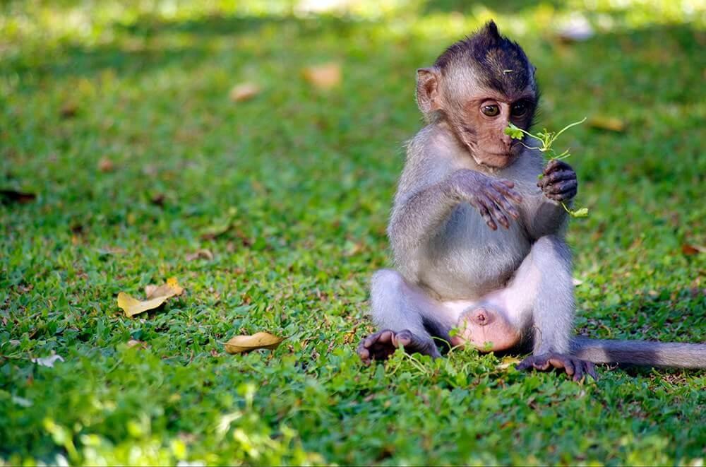 happy baby monkey