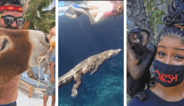 El Turismo en Tulum Repunta en Parte a Costa de los Animales