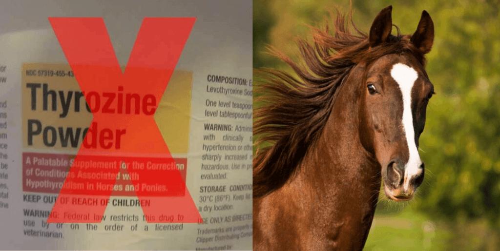 Horse in field, picture of thyrozine powder