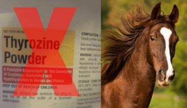 ¡Progreso Para los Caballos! Junta de Carreras de Caballos de California Endurece Reglas Sobre Medicación Para la Tiroides