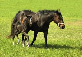 40-Year Study: HRT Dangerous for Women and Horses