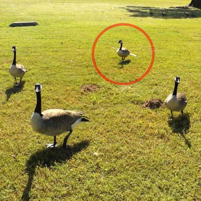 hunting-Goose-w-Arrow1