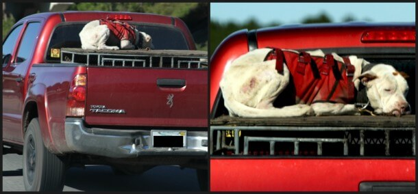 hunting-dog-on-truck-collage-610x284