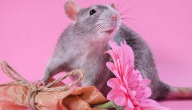 Se Conoció el Secreto: Importante Marca de Desodorantes se Une a la Lista 'Belleza Sin Conejitos' de PETA
