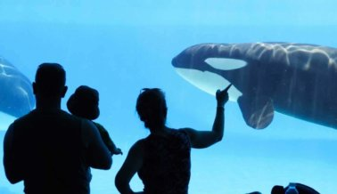 ¿Has ido a SeaWorld? Podrías recibir parte de un pago de $11.5 millones