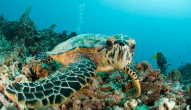 7 Datos Sobre las Tortugas Marinas que Harán que Valores Más su Vida