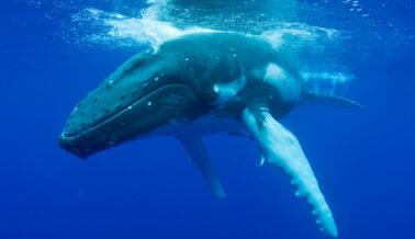Abrazos de foca y focas surfistas – estos videos demuestran que no necesitamos a SeaWorld