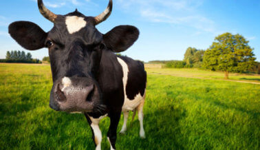 ¿La nueva regulación de alimentos orgánicos significa algo para los animales?