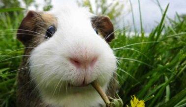 ¡Victoria! La EPA Elimina el Uso de Animales en Prueba Mortal de Pesticidas