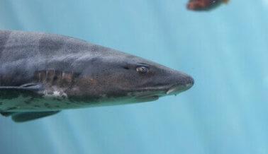 El nado con tiburones y alimentar a las mantarrayas son las peores ideas de SeaWorld hasta ahora