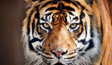Los agentes federales actúan con firmeza – de nuevo – contra un infame maltratador de animales