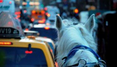 Peatones entran en pánico cuando caballo se desboca en el tráfico de NY