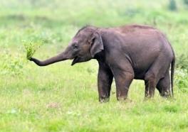 Video: Partiendo demasiado pronto, un joven elefante muere en zoológico