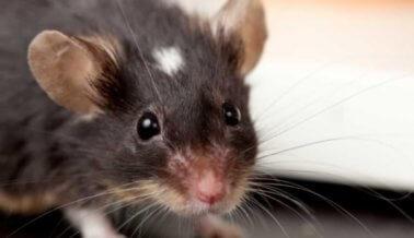 Los científicos aprenden acerca de la memoria humana estudiando humanos, no animales